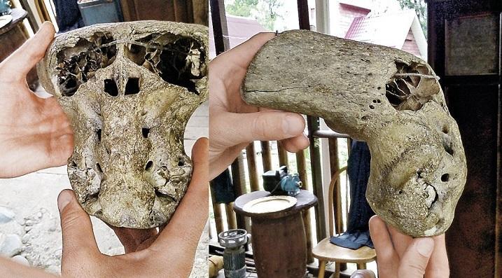 ВКалифорнии палеонтологи обнаружили череп странного животного