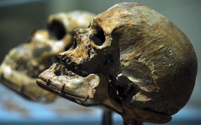 Череп, обнаруженный в Китае, ставит под сомнение теорию происхождения человека