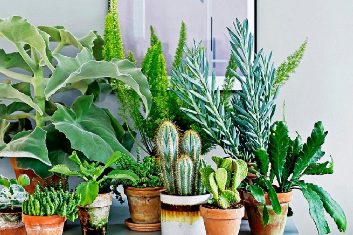 Чужие комнатные цветы: какие растения можно брать в дом, а какие нет