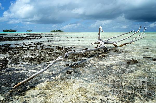 'Мертва зона в Тихом океане растет