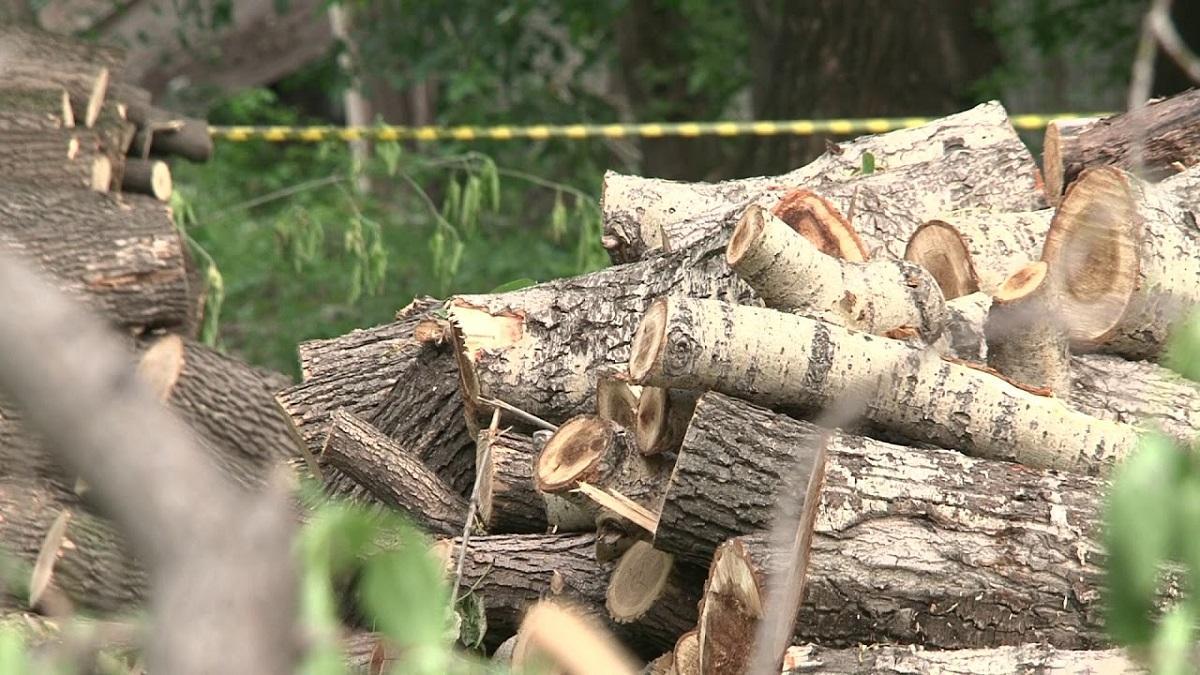 В ростовском парке на Вересаева вырубили и сожгли деревья