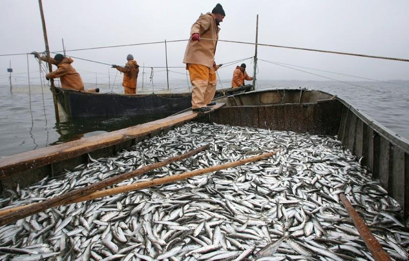 Эксперт опроверг информацию о том, что россиян осенью ждет дефицит рыбы