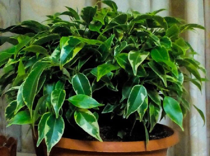 Комнатные цветы с мощным энергетическим влиянием: это растение вылечит от болезней и улучшит материальное благополучие