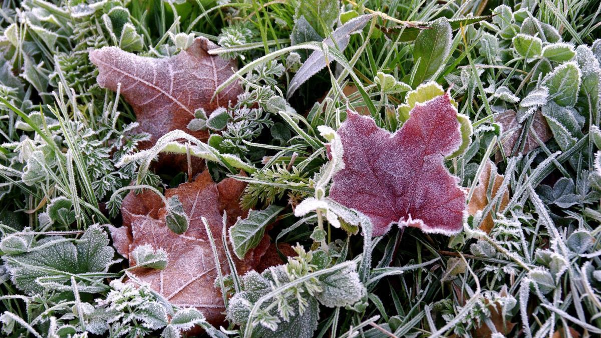 На Ставрополье надвигаются заморозки и минусовая температура