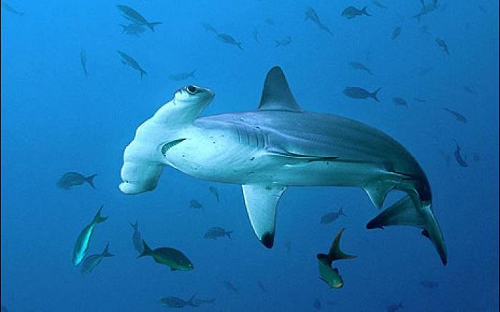 Ученые открыли новый вид акул