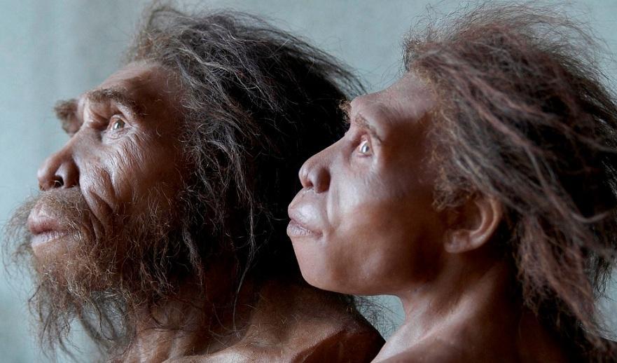 Найден новый подвид древнего человека: открытие генетиков меняет картину эволюции