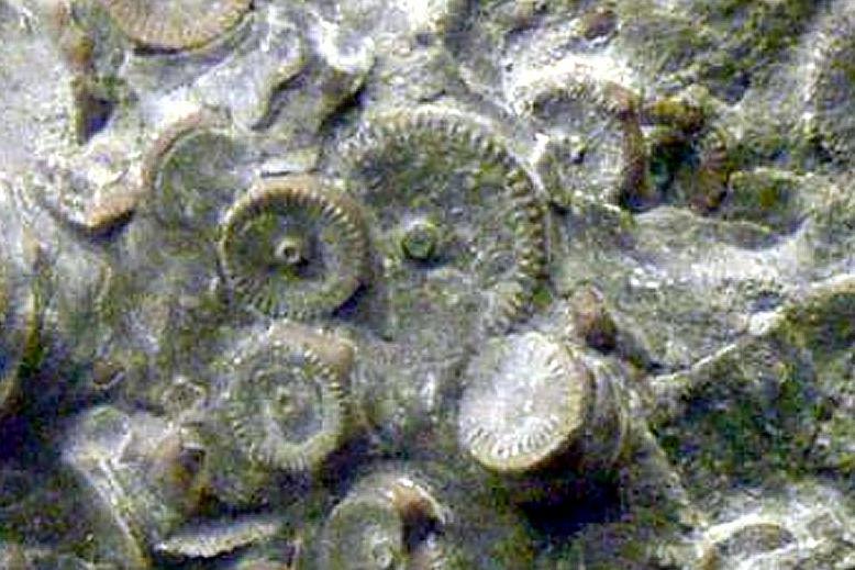 Детали механизма возрастом 400 миллионов лет найдены на Камчатке