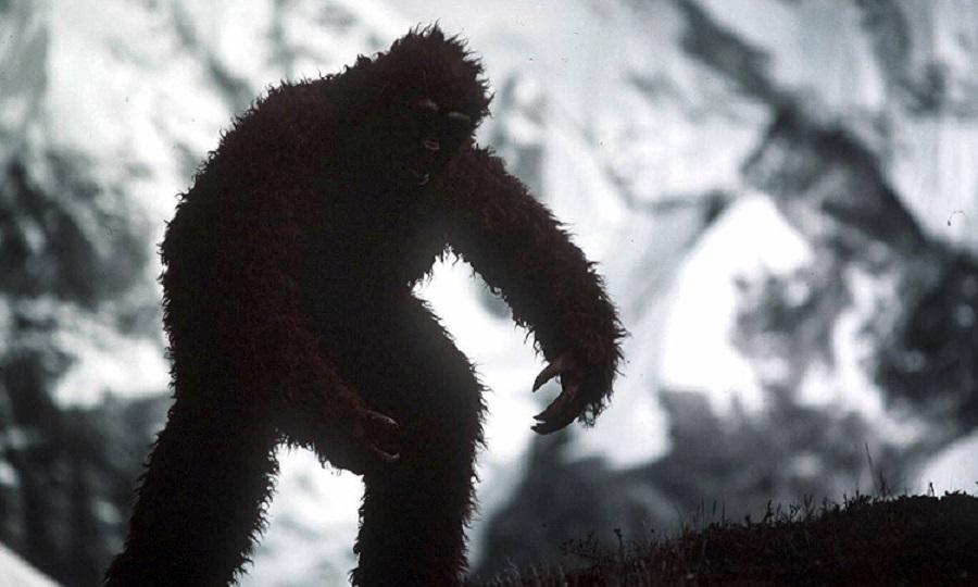 В Новосибирской области нашли доказательства существования снежного человека