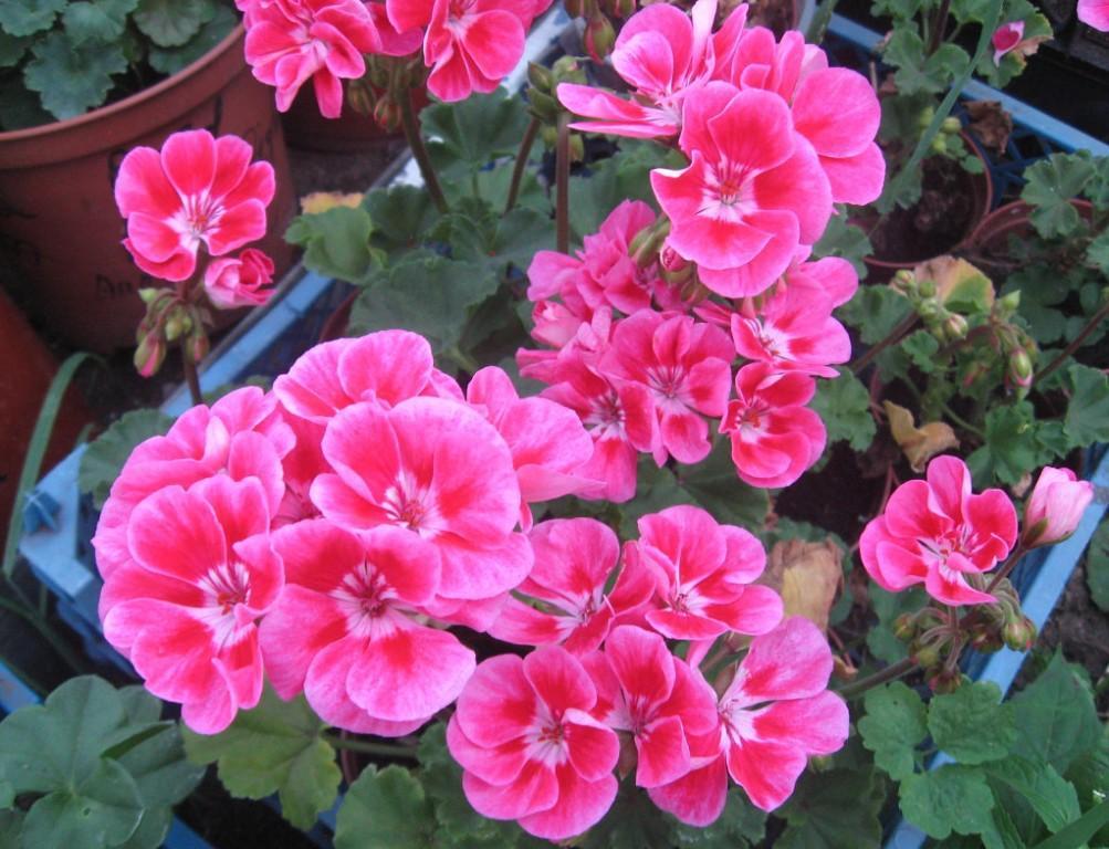 Посев цветов на рассаду в январе