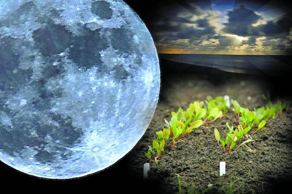 Лунный календарь садовода и огородника на апрель-2018: таблица благоприятных дней для посадки рассады
