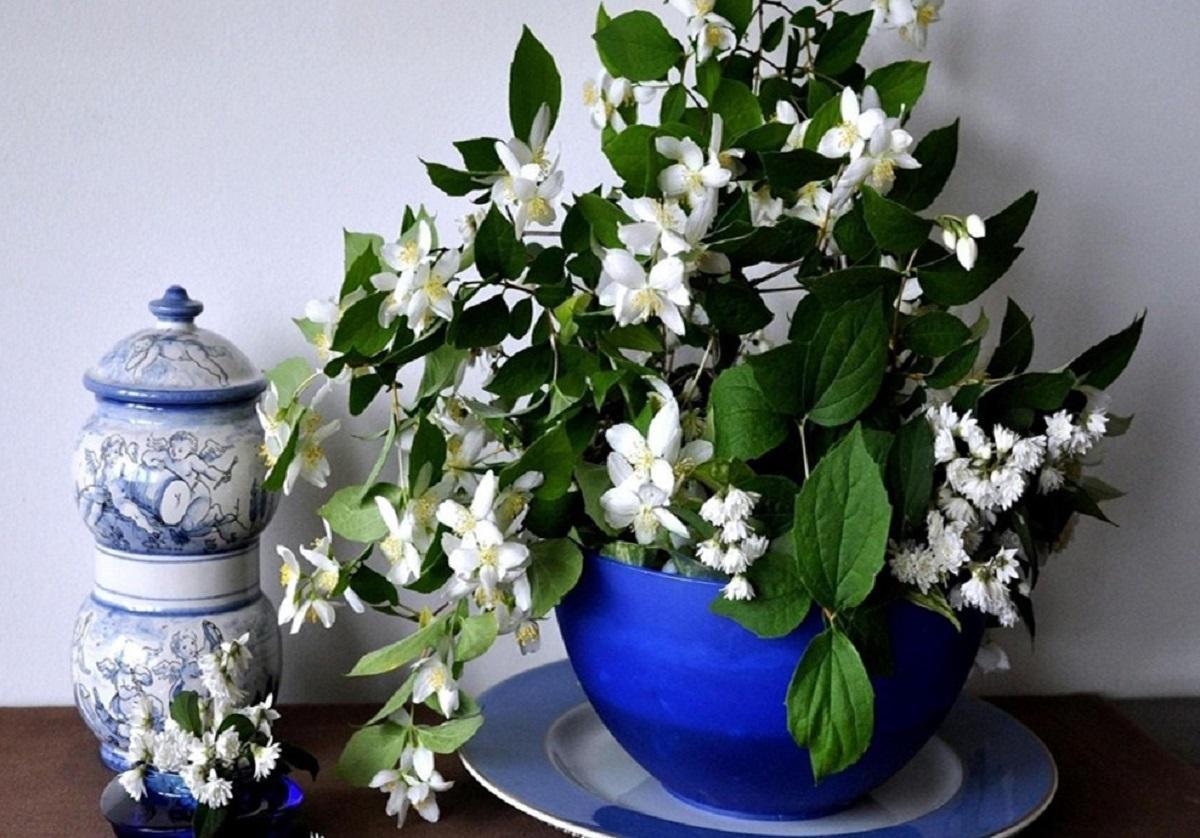 Комнатные цветы, приносящие счастье, они забирают плохую энергетику из дома