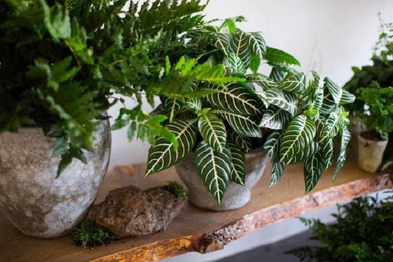 Комнатные цветы, которые защитят дом от недоброжелателей и любого негатива