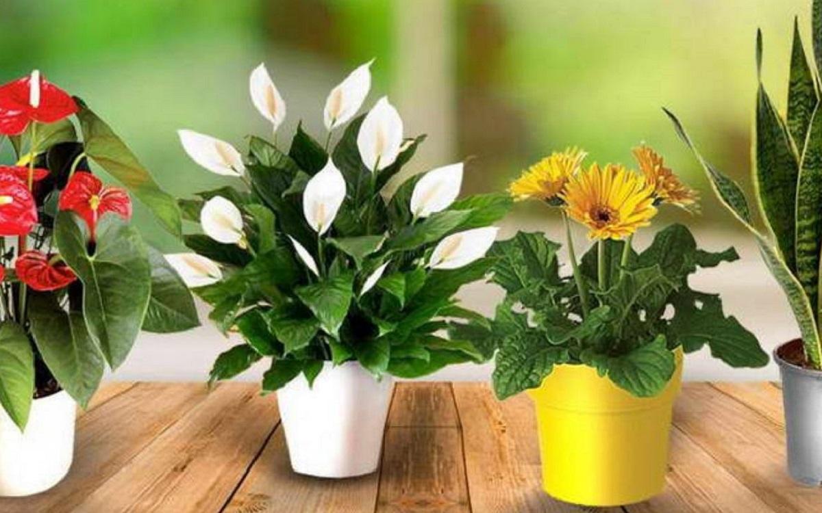 Натуральные подкормки для комнатных цветов: пять лучших народных средств