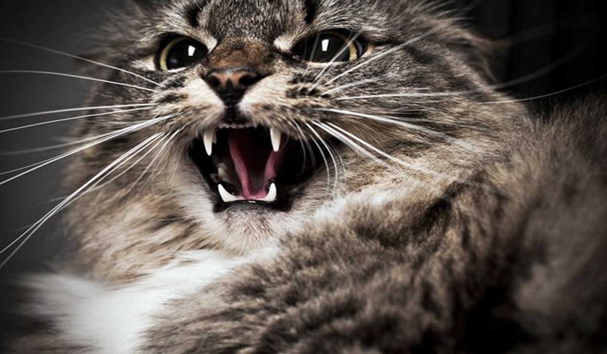 Британка из-за царапины кота лишилась пальца и могла умереть