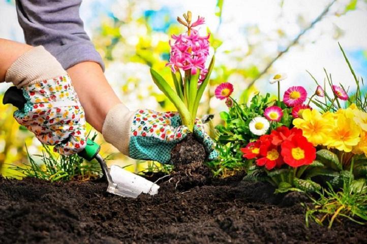 Посевной лунный календарь цветовода на 2019 год: благоприятные дни для посева цветов, высадки рассады, ухода за комнатными растениями