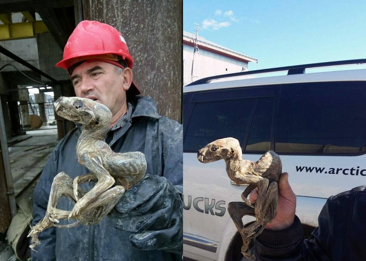 В Якутии нашли мумию неизвестного существа