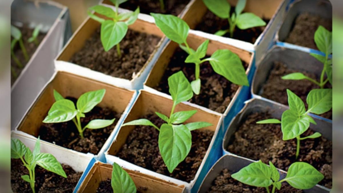 календарь посадки овощей на рассаду