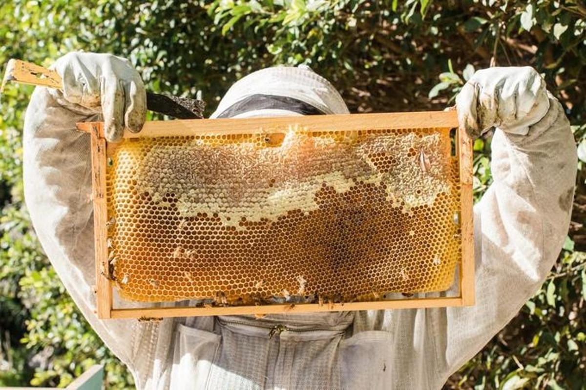 Какое количество мёда можно съесть человеку в день, рассказали врачи