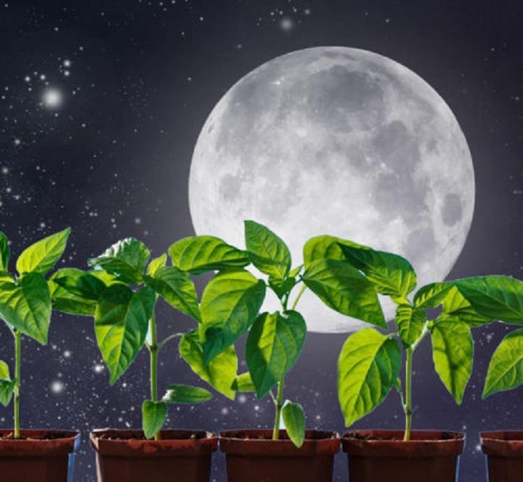 """Какую рассаду сажать в марте-2019: благоприятные дни для высадки семян, таблица лунного календаря"""""""