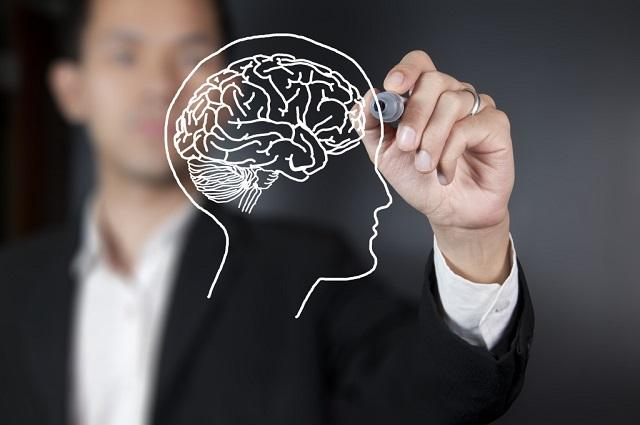 Человек рисует мозг