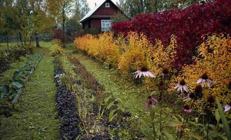 Какие огородные культуры можно сажать под зиму: список, название сортов, календарь посадок