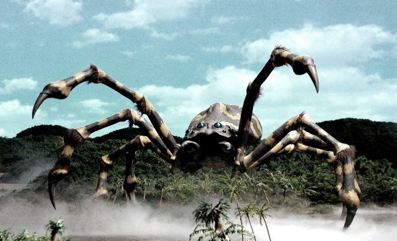 Фото огромного паука на неизвестном острове напугало пользователей Сети