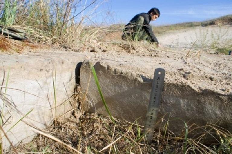 Дорога в никуда: находку в Ростовской области возрастом 38 миллионов лет не может объяснить наука