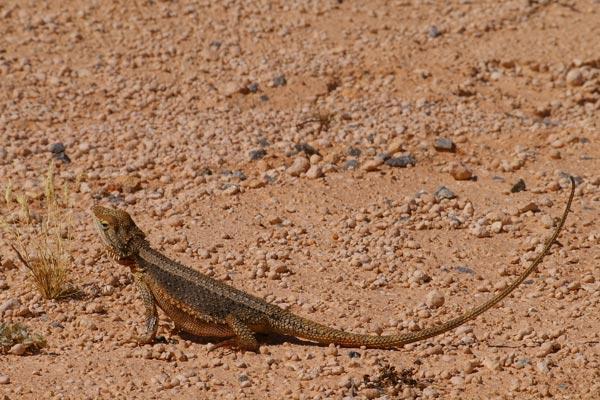Уфолог на Марсе обнаружил хвост ящерицы, вползающей в пещеру