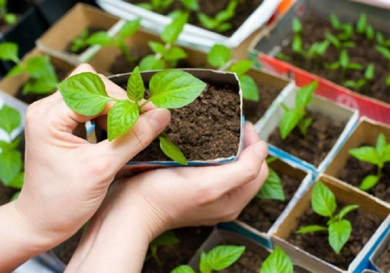 Посевной календарь на 2018 год: когда сажать рассаду, сроки посева, благоприятные и запрещенные дни для различных культур