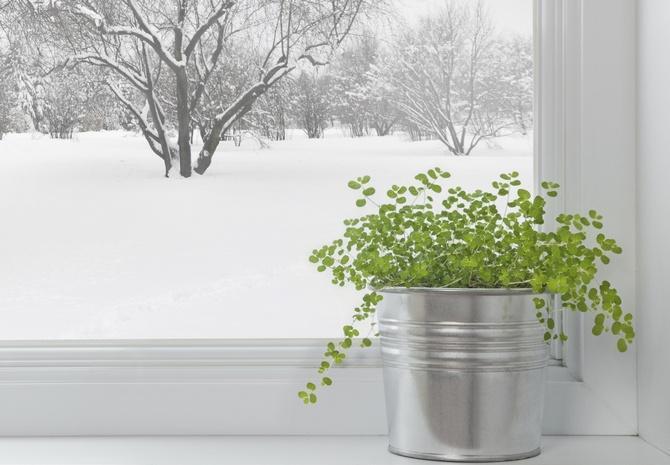 Уход за комнатными растениями в декабре