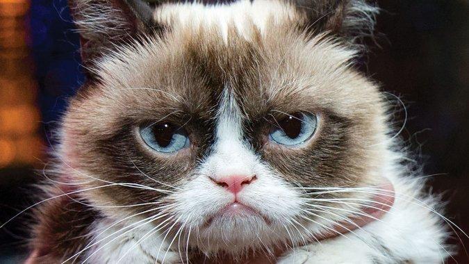 """Встретиться с """"сердитым котиком"""" пришло более 500 жителей Великобритании"""