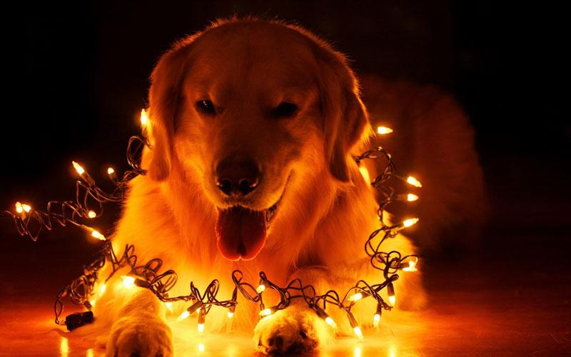 Новый 2018 год Желтой Собаки: когда наступит по Восточному календарю