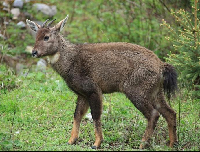 Депутат Госдумы предложил легализовать охоту на животных из Красной книги