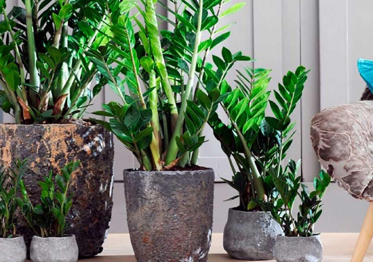 Комнатные растения для финансовой стабильности семьи: как усилить их влияние и привлечь в дом достаток