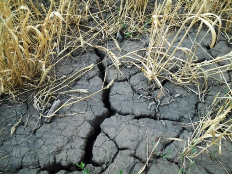 Культуры погибли из-за засухи