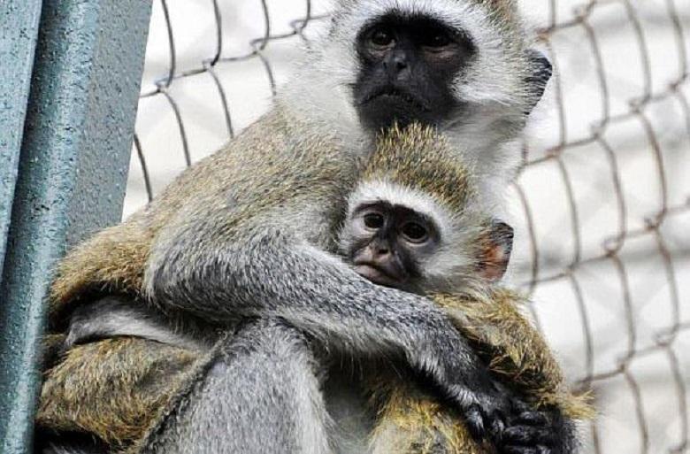 Срочная эвакуация: в ростовский зоопарк пришло письмо о заложенной бомбе