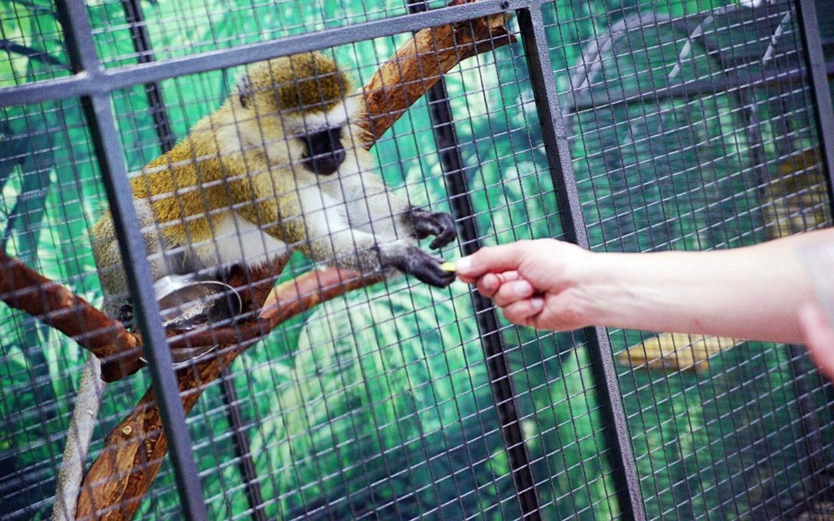 В России для зоопарков установили новые правила содержания