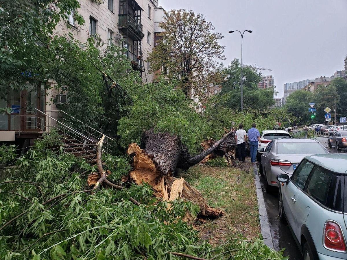 В Ростове из-за разбушевавшейся стихии упало почти 30 деревьев