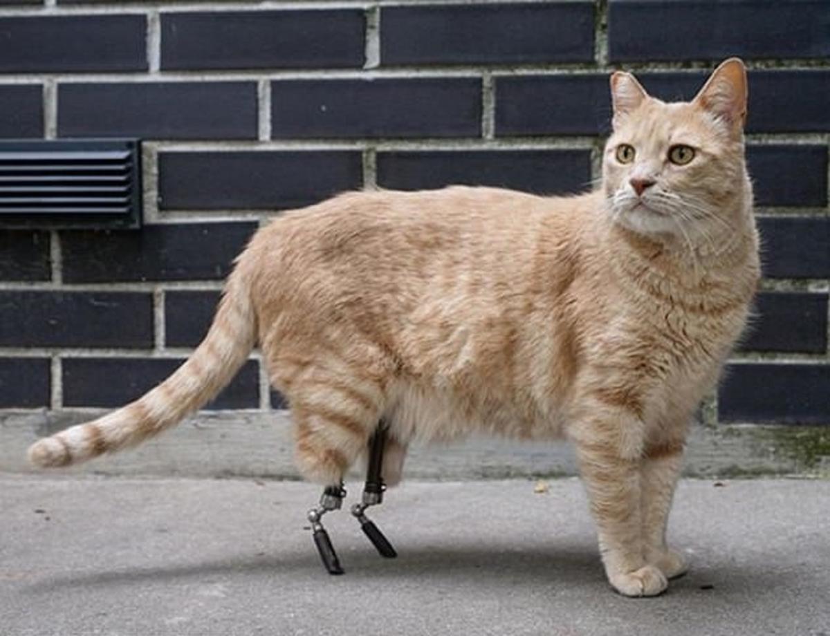 В Италии кот стал звездой соцсетей после установки бионических протезов