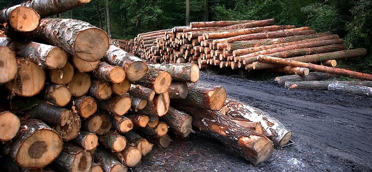 На Кубани «черные лесорубы» вырубили деревьев на 22 миллиона рублей