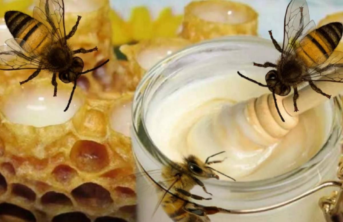 Пчелиный йогурт изобрели на Ставрополье