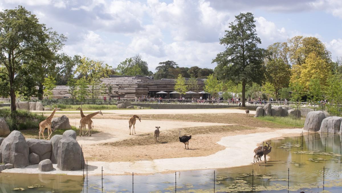 зоопарк, жираф, страус, камни, деревья, водоем