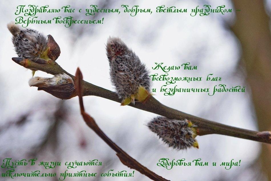 Красивые открытки с Вербным воскресеньем 25 апреля 2021 года